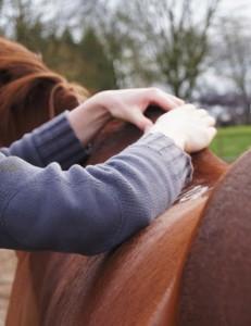 massage of horse