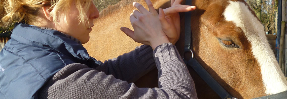 Equine and Canine Back Specialist  07951793350